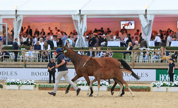 The Equerry Bolesworth International Horse Show Elite Auction 2018 - Can Records Be Broken?